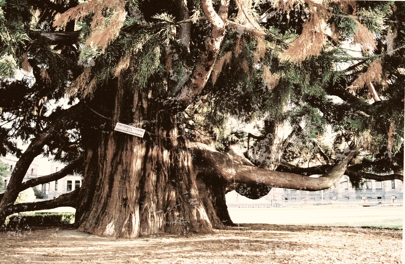 Arbre, Victoria 2000 retouché